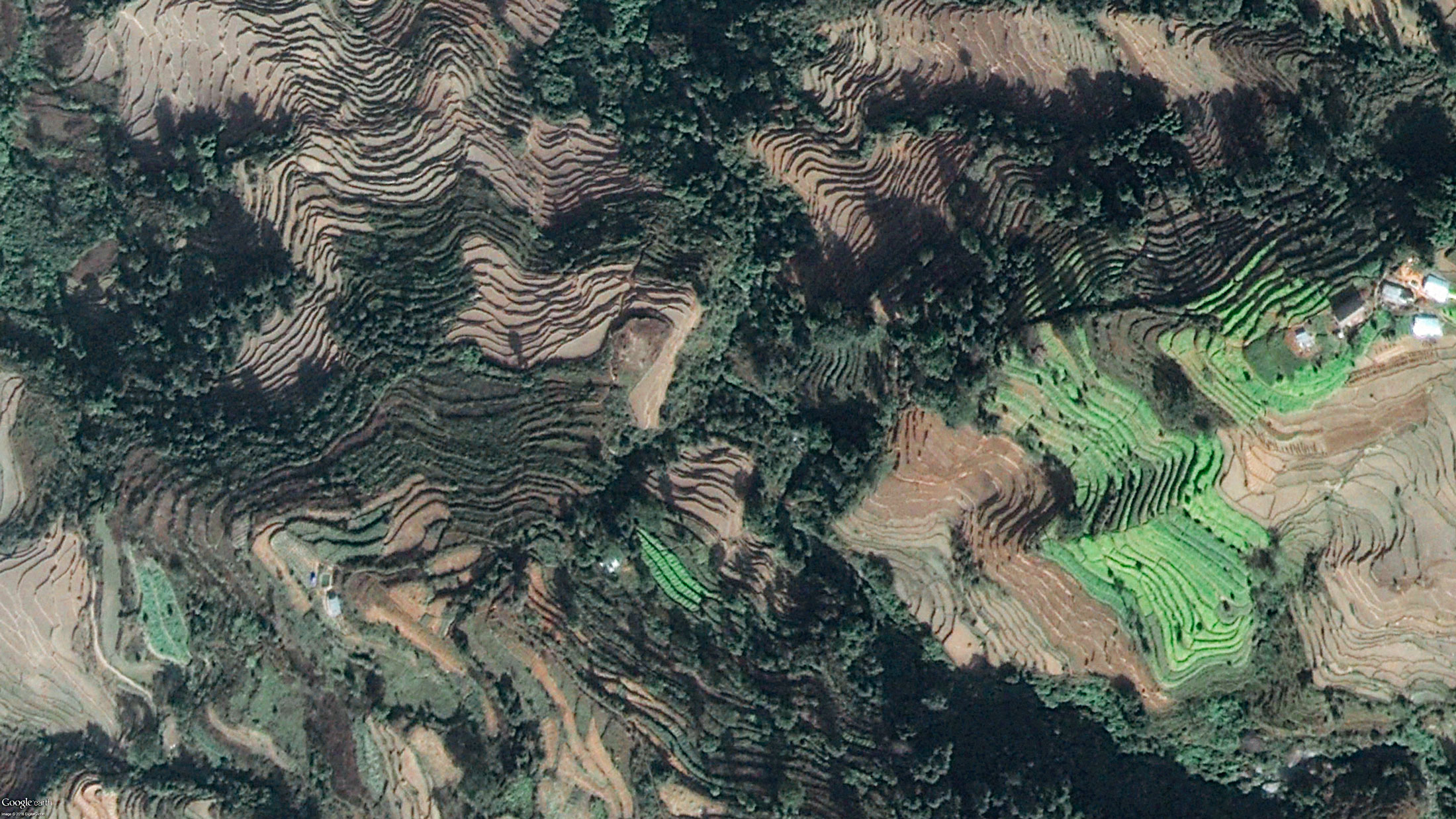 Top view of rice terraces in Nagarkot, in the Kathmandu valley, Nepal.  The Global Agricultural Research Partnership, CGIAR, supports climate-smart agricultural practices in Nepal, to build adaptive capacity and resilience in managing climate change.